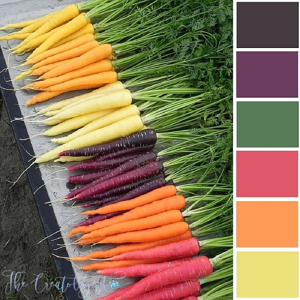 Color Inspiration | Colorful Carrots
