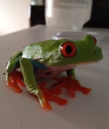 Bubble Gum the Tree Frog