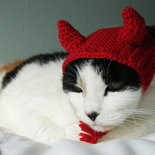 Devil Costume Pet Cat Dog Hat Headband by Lindsay Smith