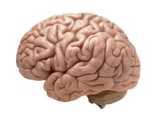 brain-white background