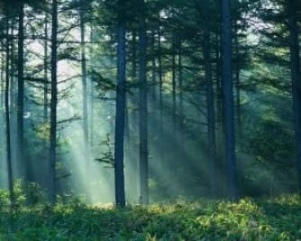 Sunlight Shining Through Forest