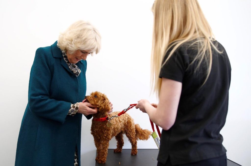 Camilla meets alert dogs opening new Medical Detection Dogs