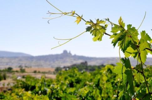 DSC 0984 In Turkey, Wine Hop Between Fairy Chimneys