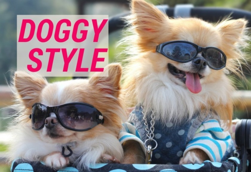 Doggy Style Japan S Most Pampered Pooches The Culture Map