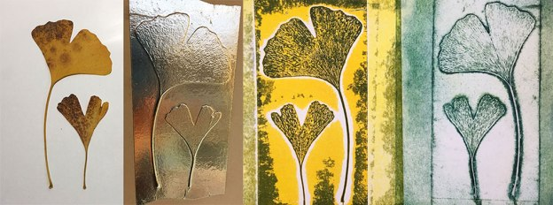 Ginkgo sequence