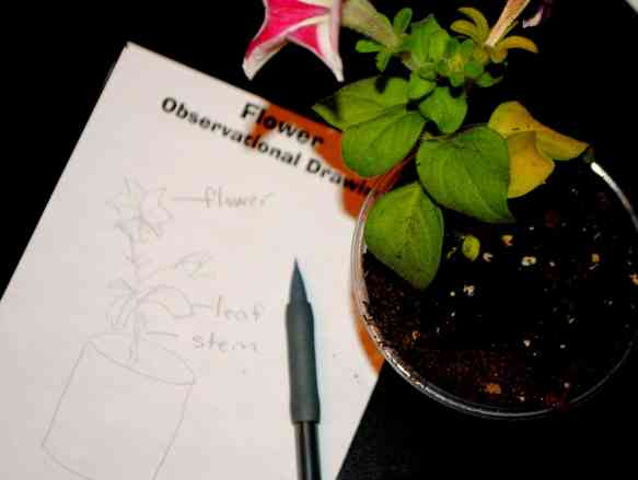 Flowers: Interactive Science Notebook Pages FREE from The Curriculum Corner | plants and flowers
