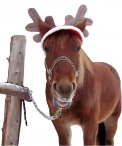 I am a reindeer honest