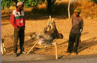 Guinea Blog-Optimized002
