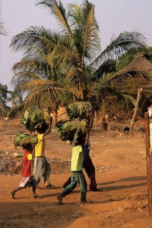 Guinea Blog-Optimized035