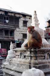 Nepal 029