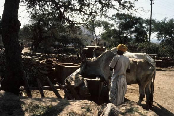 India - CWY Exchange 047