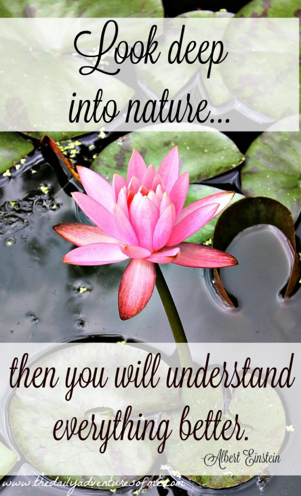 Albert Einstein inspiration www.thedailyadventuresofme.com