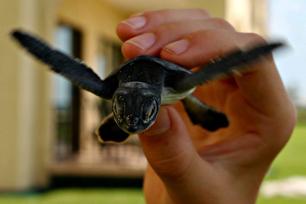 Sea Turtles Cancun Mexico www.thedailyadventuresofme.com