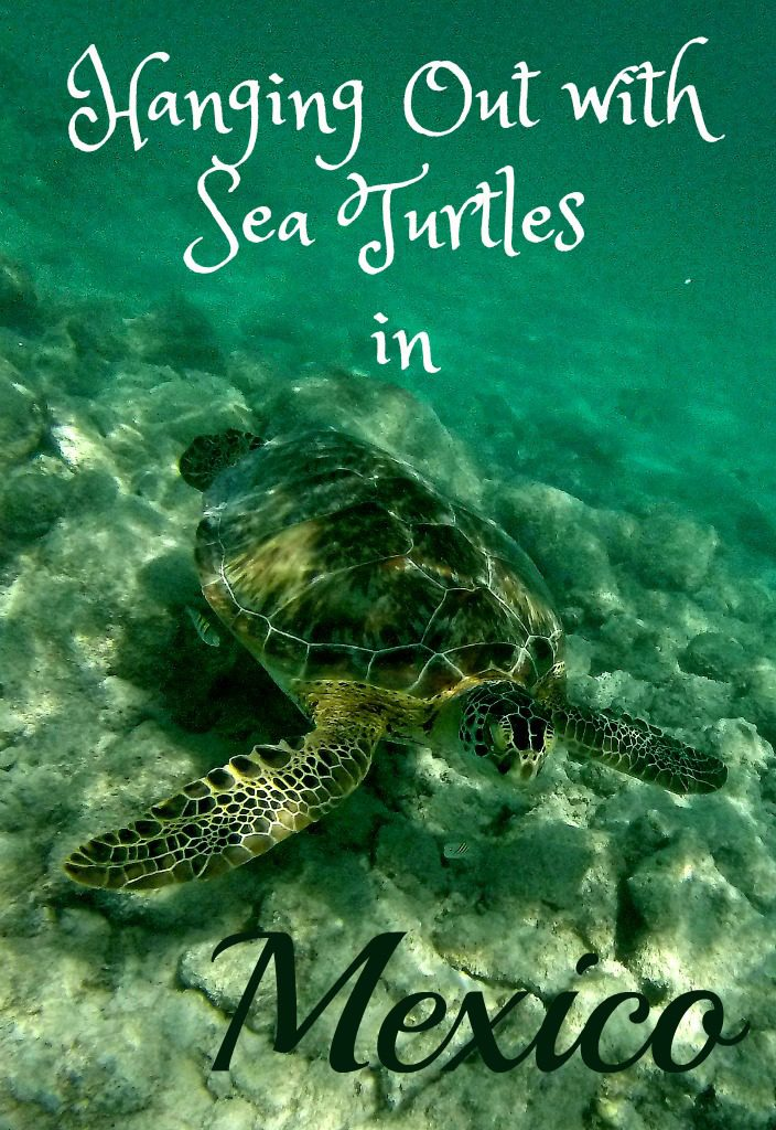 Hanging out with sea turtles in Cancun, Mexico www.thedailyadventuresofme.com