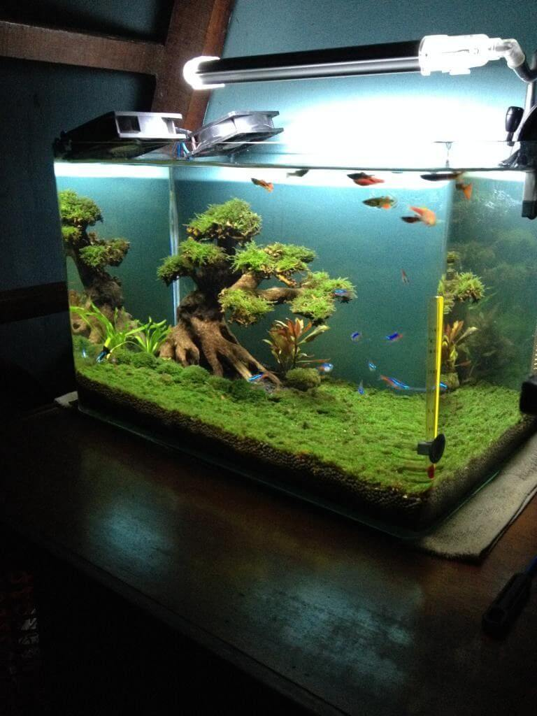The Whole Aquascaping Procedure May Appear Challenging To Achieve, However  Itu0027s Not As Hard As It Looks If You Adhere To A Basic Set Of Concepts.