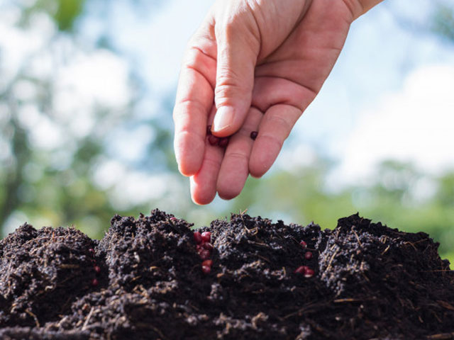 Planting Seeds. . .