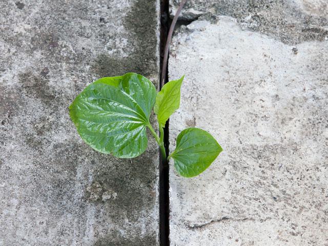 Cultivate. . .