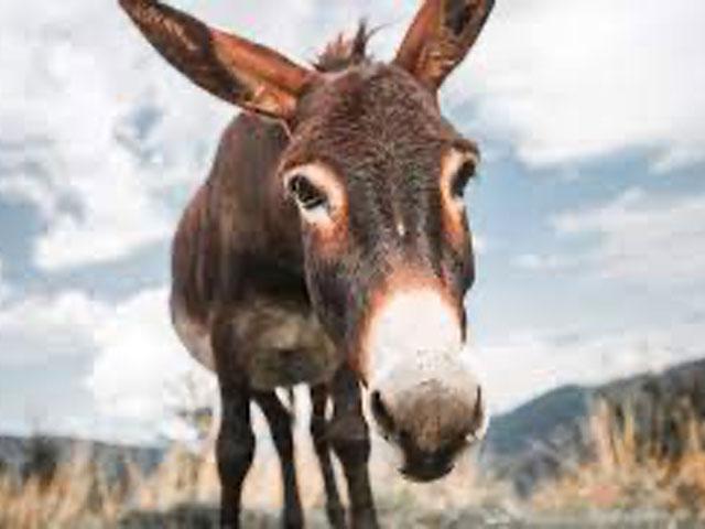 The Donkey. . .