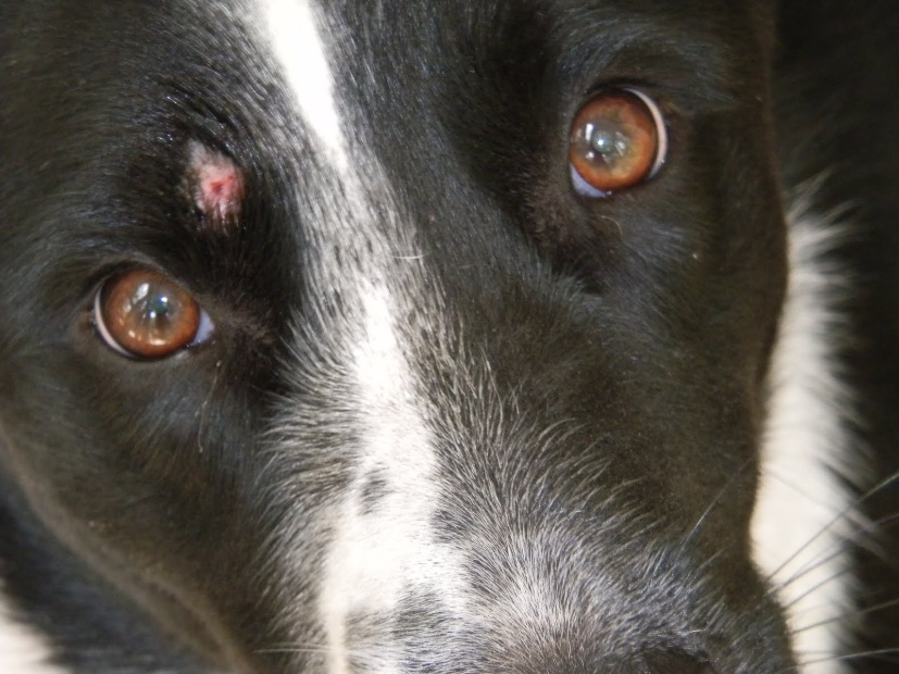 Can Ringworm Be Cured In Dogs
