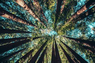 bomen-planten-vanuit-huis-thedailygreen