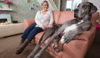 freddy the tallest dog