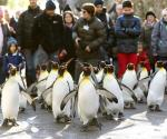 walk like penguin on ice to avoid slipping