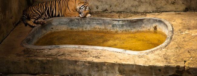 zoo10-650x250