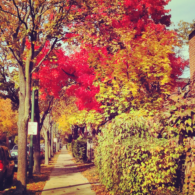 The Last Fall Photo You'll Ever See- Really.