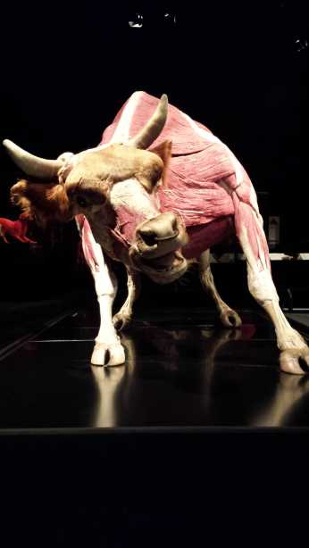 Animal Inside Out exhibit - Perot Museum, Dallas Texas