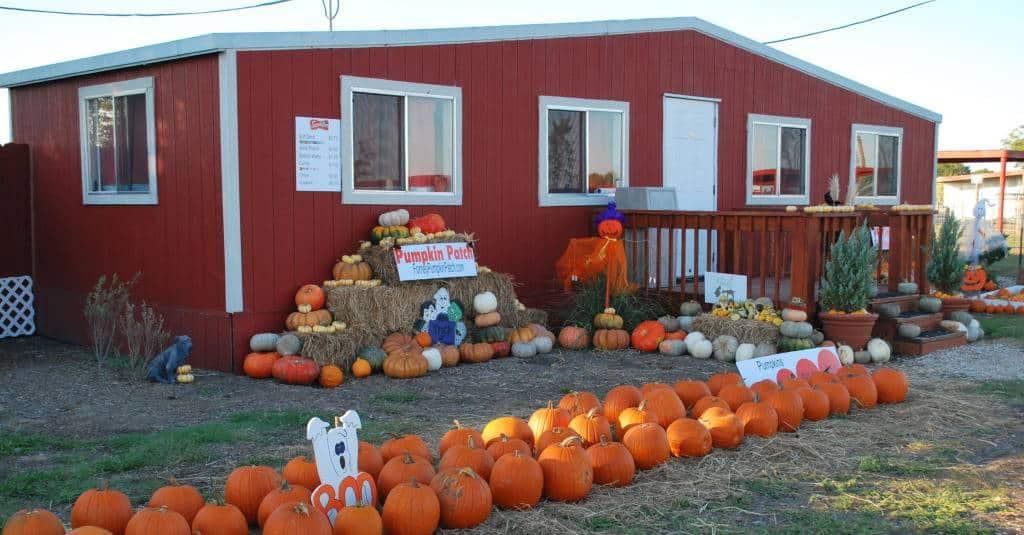 Pumpkin Patches in Dallas - Ft Worth Area North