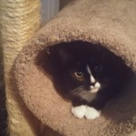 Sinta in his cat tree