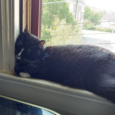 Sinta Kitty Sleeping in the window