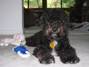 Deb Eleanor's Agent's Dog