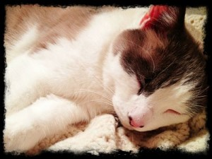 TrioSleeping_opt