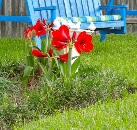 Morning in the Garden