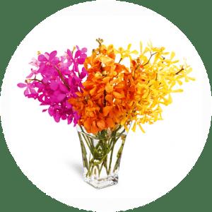Fuchsia-Mokara-Orchids-1-300x300