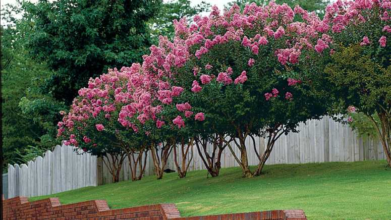 Beautifying Garden Using Colorful Trees Shrubs