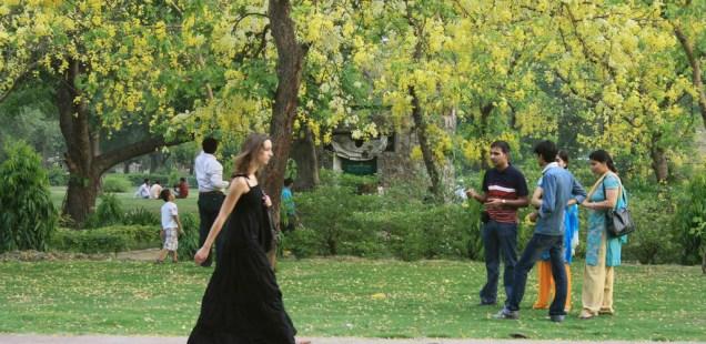 City Nature - Amaltas Trees, Outside Humayun's Tomb