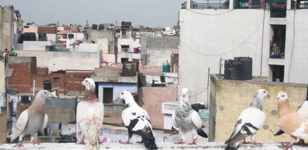 Atget's Corner – 606-610, Delhi Photos