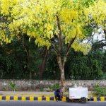 Atget's Corner – 1006-1010, Delhi Photos