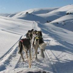 A day of dog sledding
