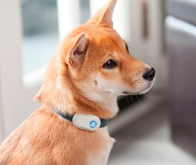 4 must-have tech gadgets for the pet-obsessed