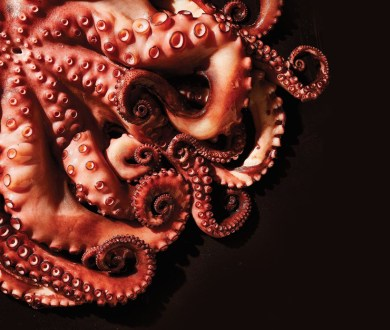 These delicious dishes are showcasing octopus in all of its glory