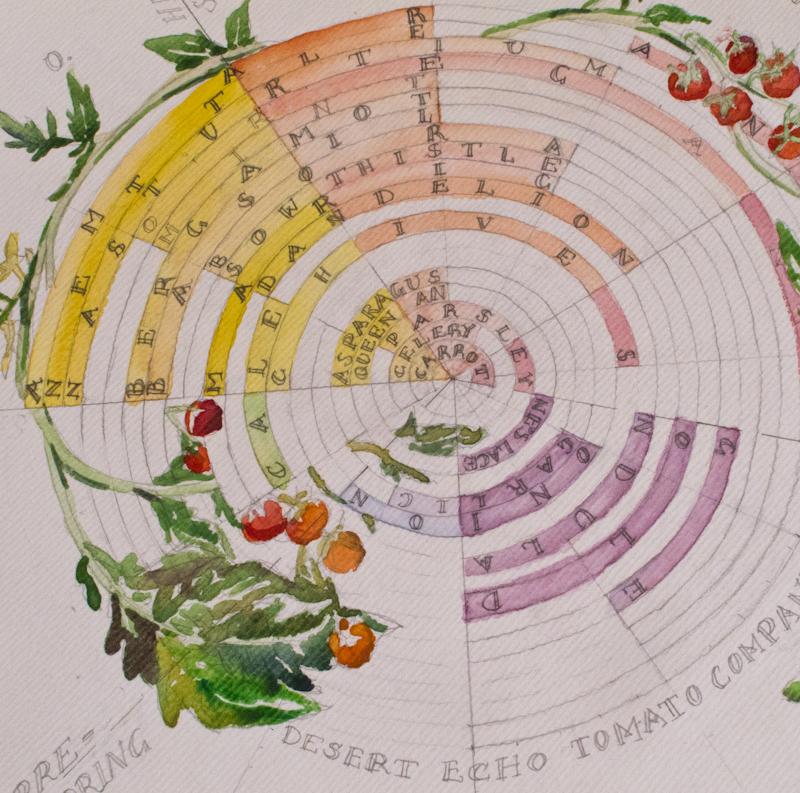 COMPANION PLANTING - CALENDULA & MARIGOLD