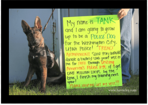 Tank Washington City Police K9