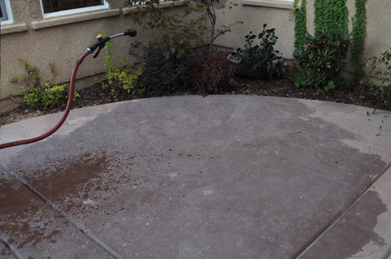 Hosing down the Plants before Cleaning for The Design Confidential Patio Rescue and Resurface Prep Work