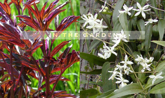 The Design Confidential In the Garden Adding Year Round Color and Interest