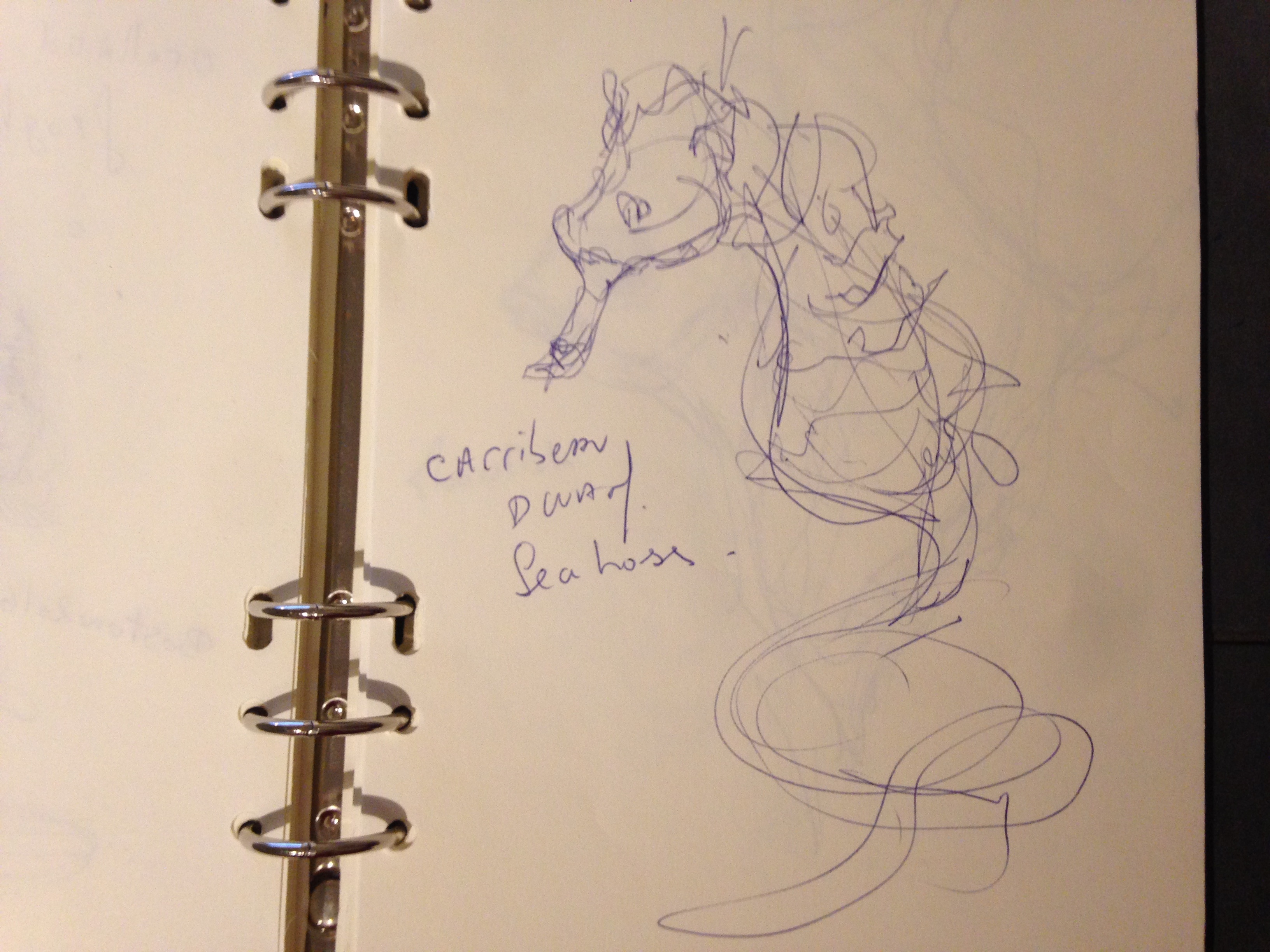 the design sketchbook sketch boston acquarium fish drawing ball point pen blue bic carribean dwarf seahorse