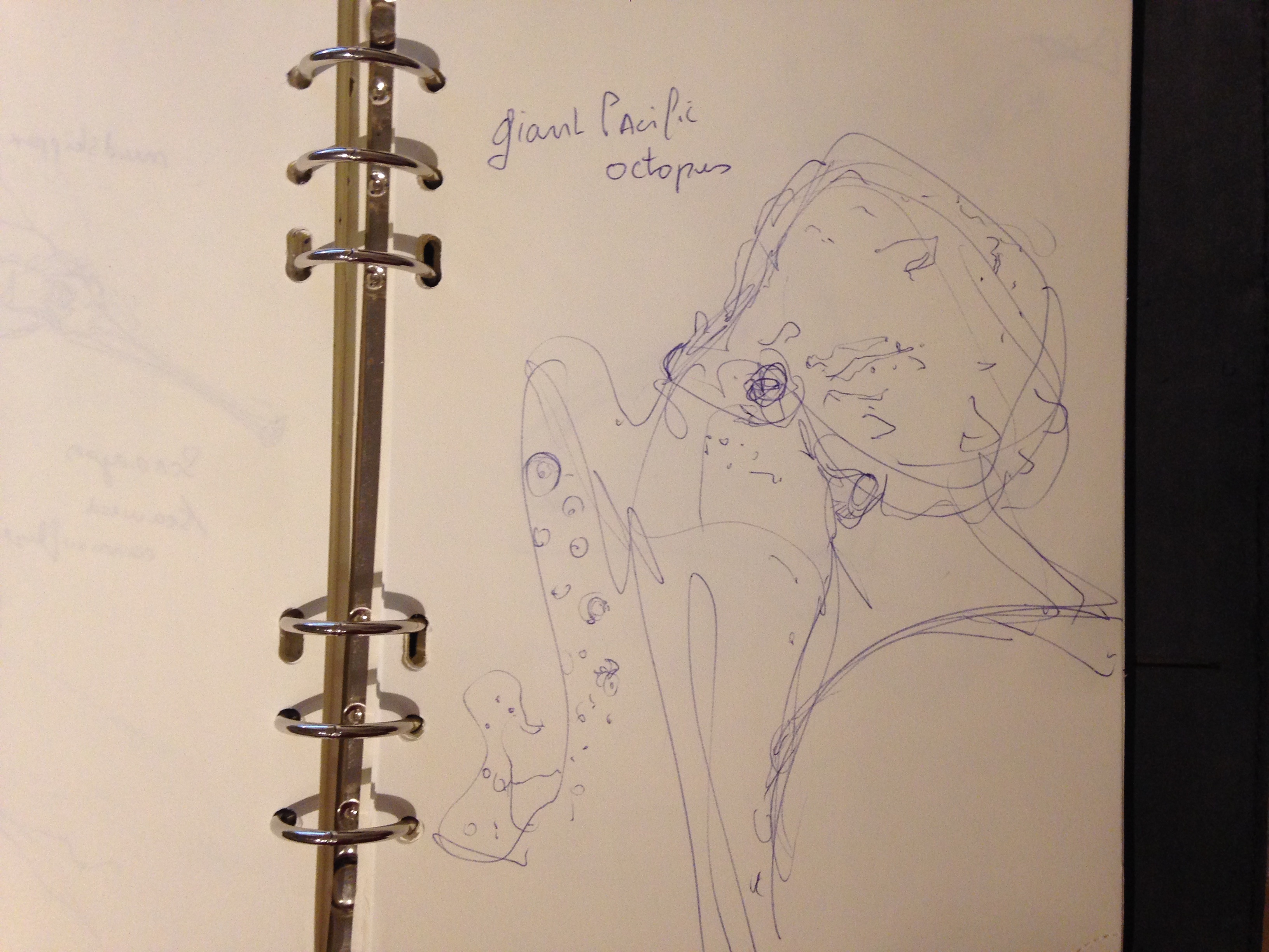 the design sketchbook sketch boston acquarium fish drawing ball point pen blue bic giant octopus