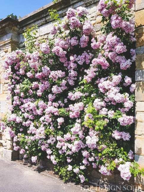 Walls of roses